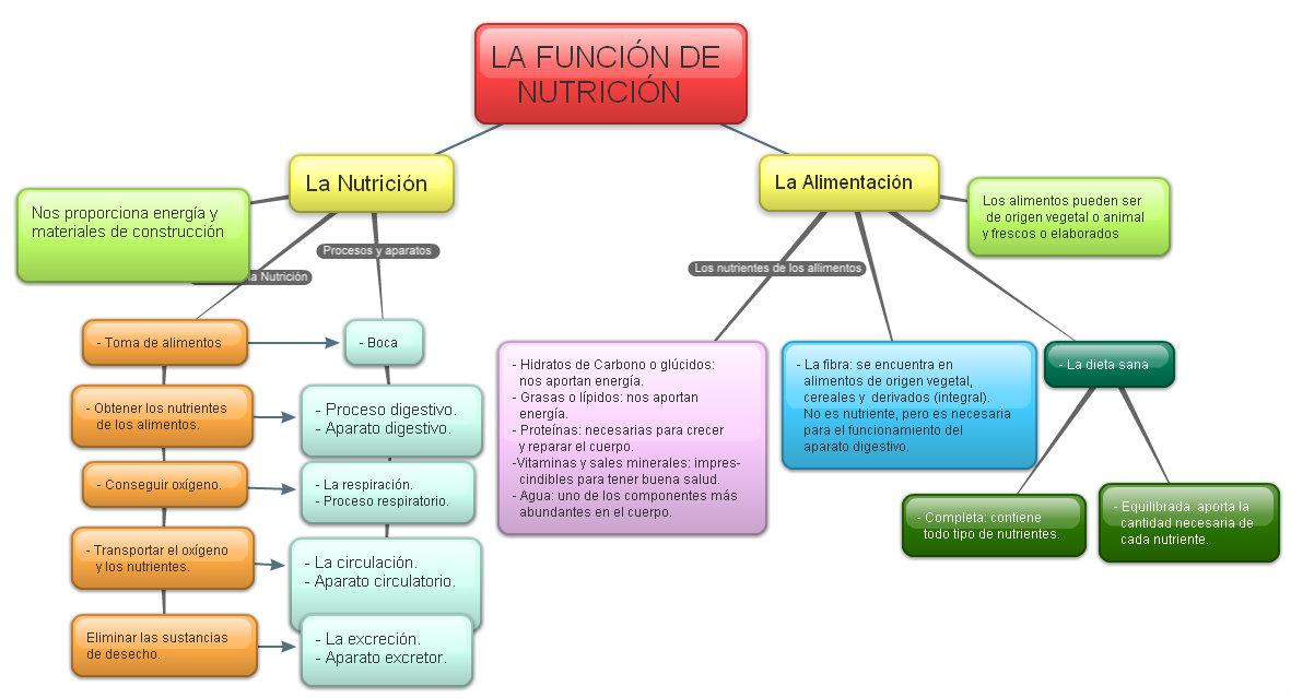 C. NATURALEZA/ C. SOCIALES 6º : La Nutrición