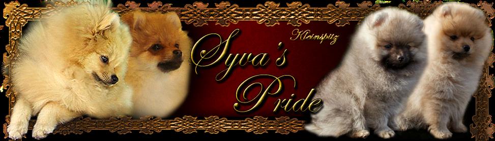 kleinspitz kennel Syva's Pride - Hungary