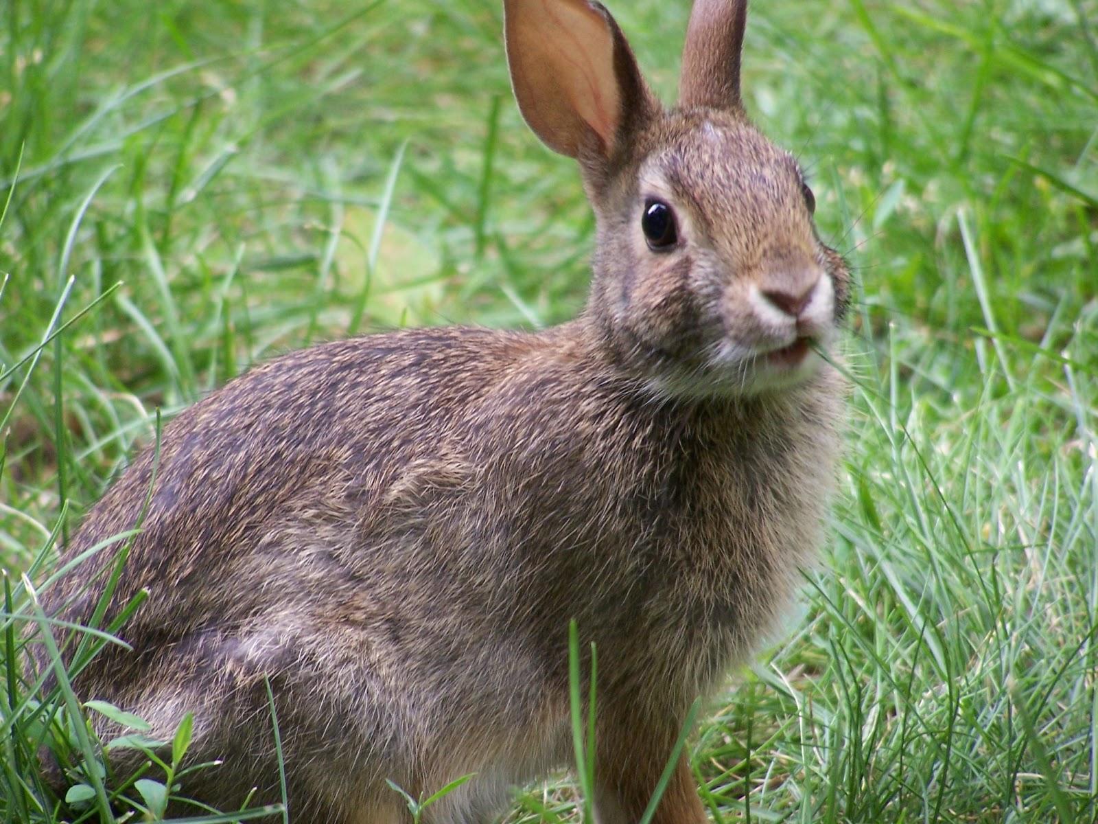 The Rabbit | The Wildlife