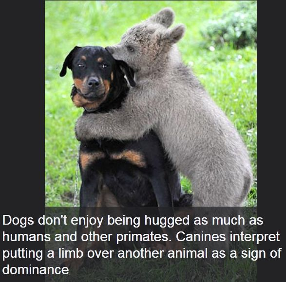 Damn Funny Pics: Interesting Facts About Dogs