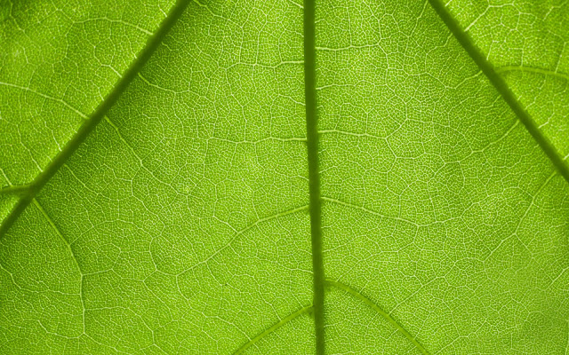 nature wallpaper, leaf wallpaper, wallpaper, green wallpaper, wallpaper nature