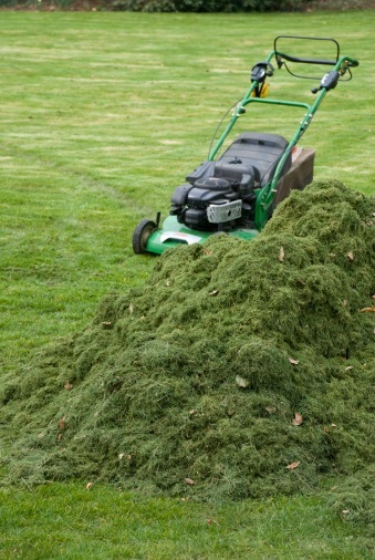 Fact #3: If your mower is clumping (because you are trying to cut too much  at once), it is best to bag the lawn clippings.