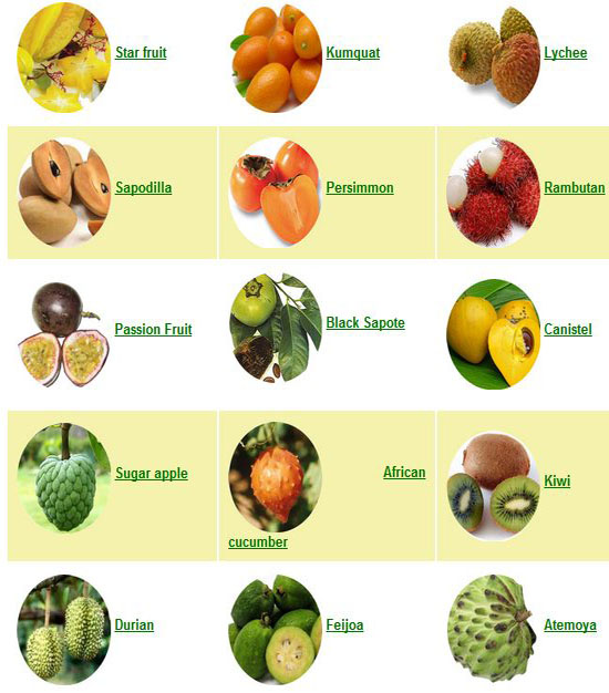 Juwita Blog  Fruits   ...