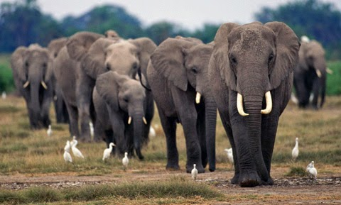 CITES : Συνθήκη για το διεθνές εμπόριο απειλουμένων ειδών ζώων και φυτών.