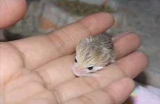 7 Hewan Terkecil Di Dunia Yang Pernah Ditemukan