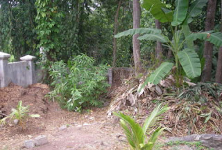Composting, La Ceiba, Honduras