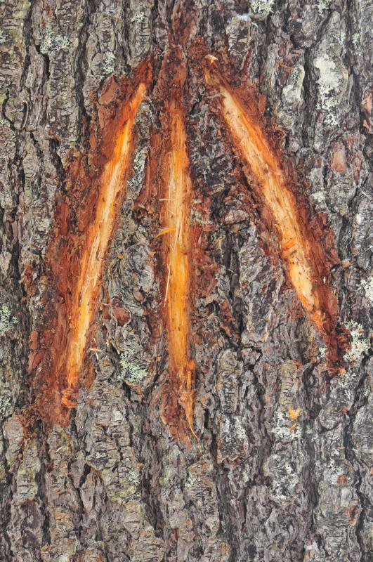 Tree Marking Symbols to Mark Trees For Use by The