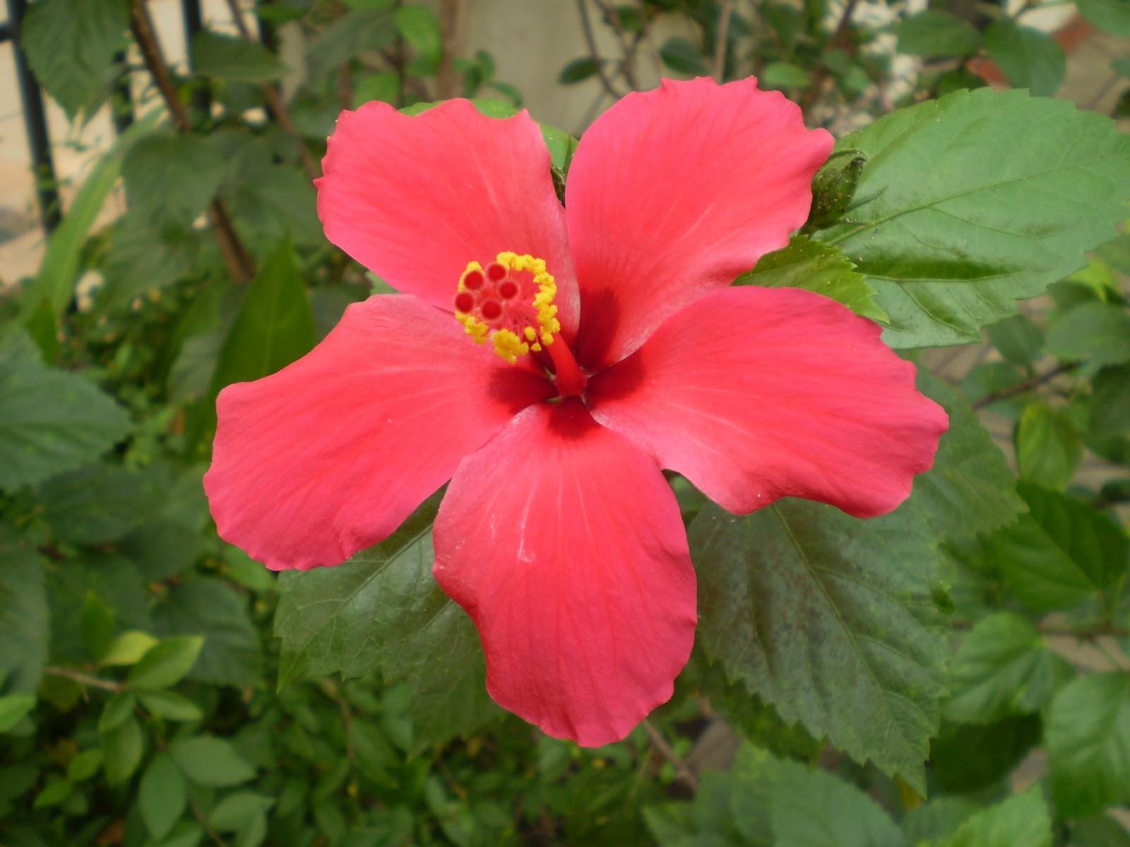 flora fauna africa: