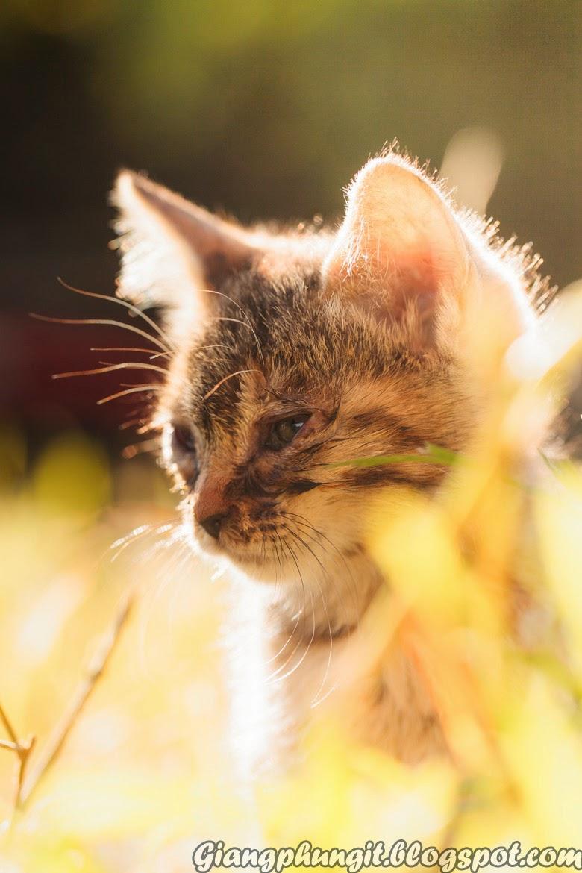 Album ảnh về chú mèo đáng yêu Anhmeo-3