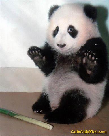 cute-panda.jpg