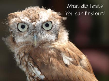 Image result for owl pellets workshop