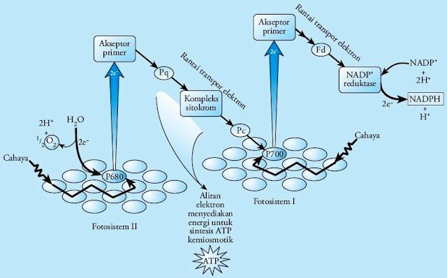 Aliran elektron nonsiklik reaksi terang