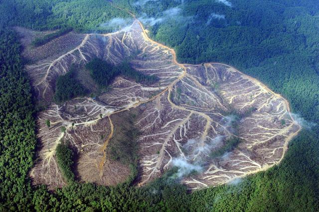 WARSI : Hutan Jambi Hanya Tersisa 1, 1 Juta Hektar