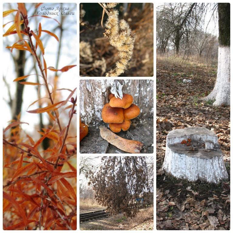 Январские грибы