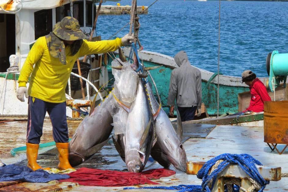 Nelayan menangkap ikan tuna Nelayan kembali ke pelabuhan di Koror di Pulau Pasifik bangsa Palau