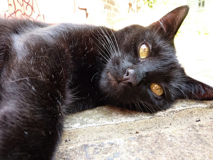 My fabulous black cat Murty