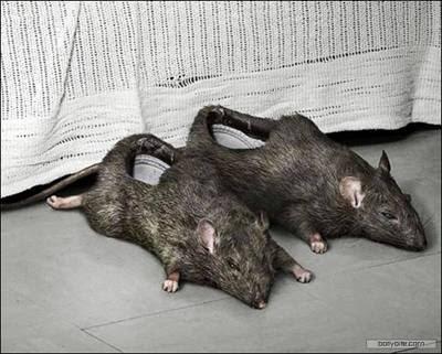 OrangPadi , Orang Padi , Orang , Padi , kasut , tikus , pelik , ajaib , kelako , kelakar , funny