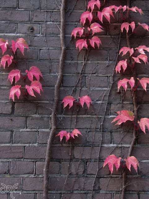 red ivy on brown wall