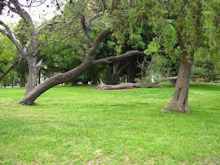 fallen tree landscape prado park