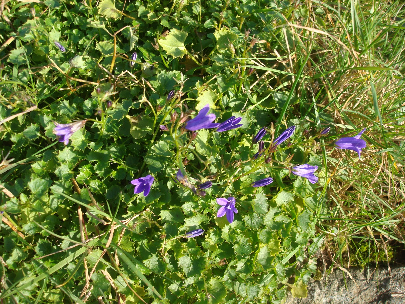 Fleuriste isabelle feuvrier - Jardin novembre ...