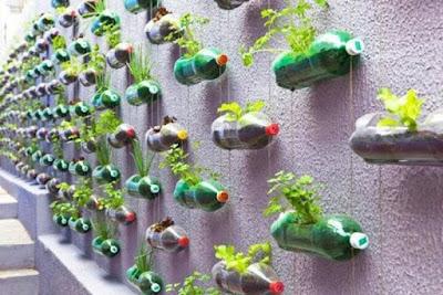 Tips Istimewa Berkebun Sayur Tanpa Lahan