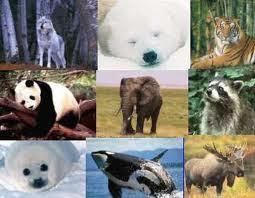 """1º Tema de pesquisa do Grupo """" Animais"""""""