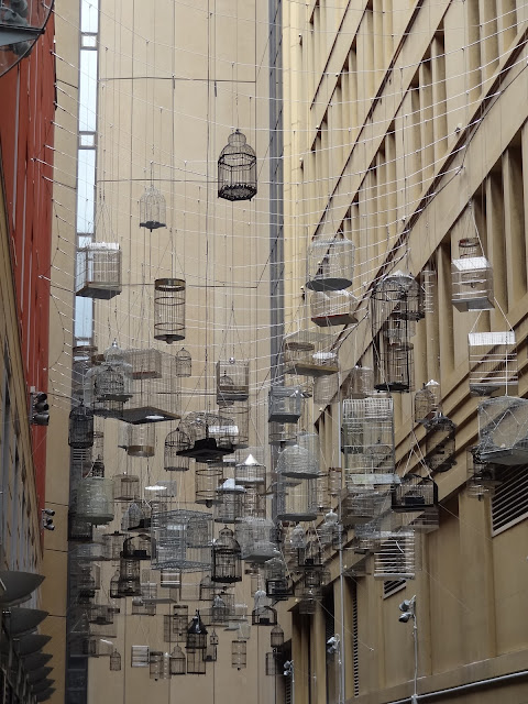 sydney australia birdcage forgotten songs