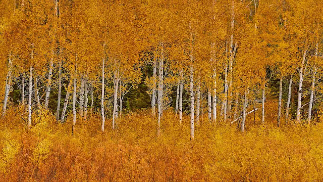 Autumn aspens in Grand Teton National Park, Wyoming (© Matt Anderson Photography/Getty Images) 715