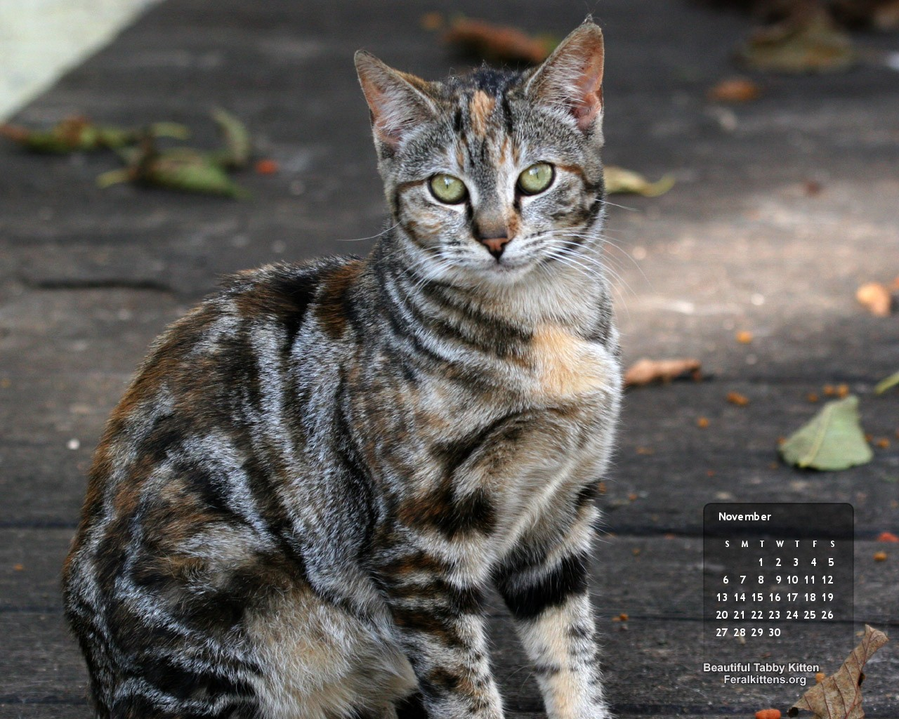Tabby Related Keywords - Tabby Long Tail Keywords KeywordsKing Tabby Cat