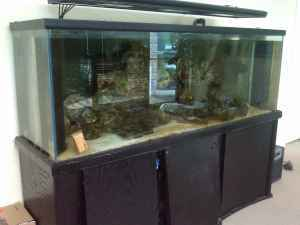 Giant Aquariums: 250 Gal.