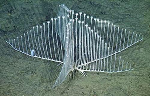 Hewan Langka Di Dasar Laut