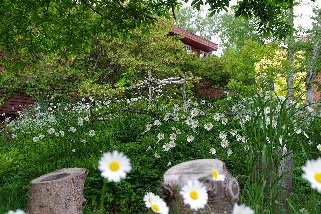 我が家の庭6月