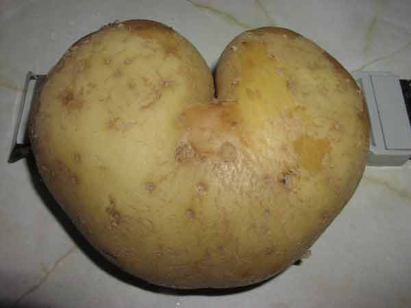 [Immagine: patata.jpg]