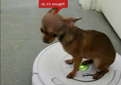 video divertido perro chihuahua sobre robot roomba