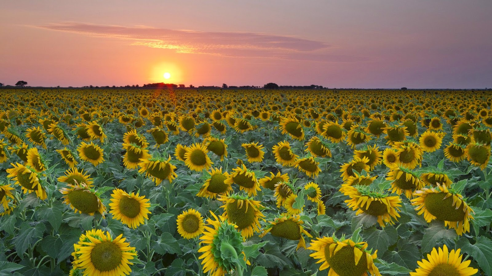 Hoa Đẹp | Hình Ảnh Hoa Đẹp | Hình Hoa Đẹp Nhất Thế Giới
