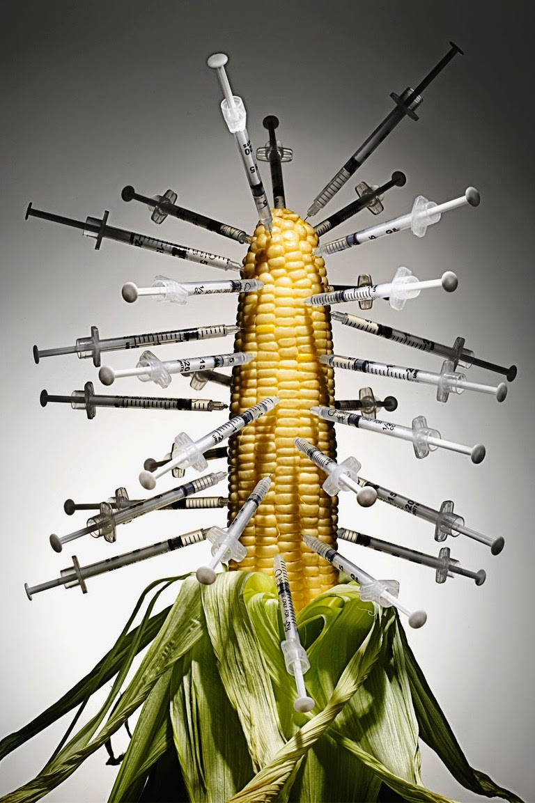 Sería criminal autorizar la siembra de maíz transgénico: experto