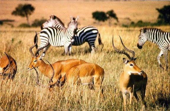 Khám phá Trung Đông hoang dã trên Animal Planet