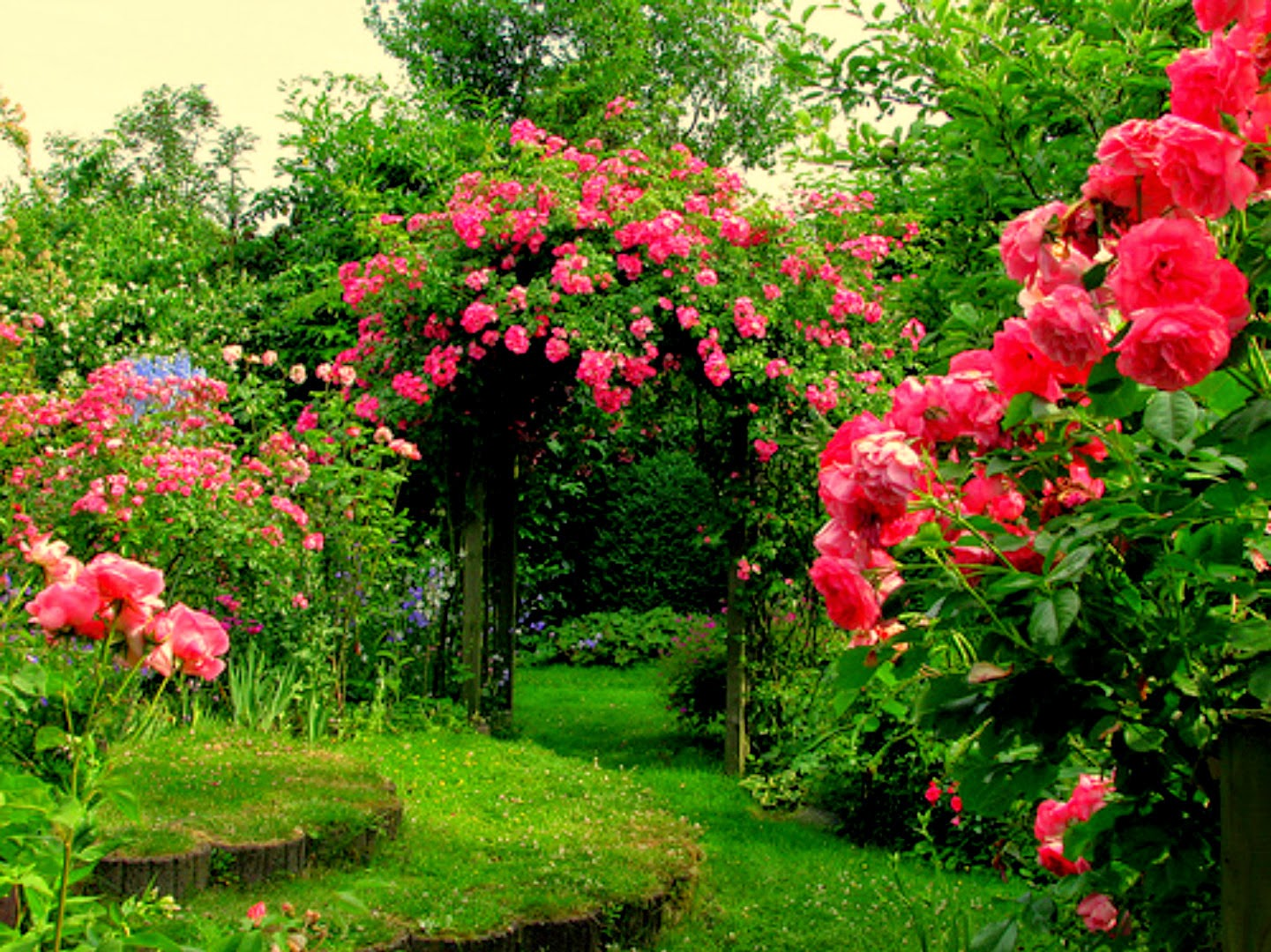 Rose Flower Garden Wallpaper