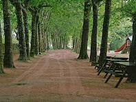 Passeig entre plataners al Parc de les Set Fonts. Autor: Carlos Albacete