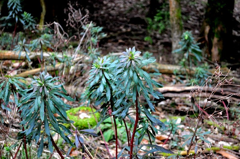 Woodland plants and nature