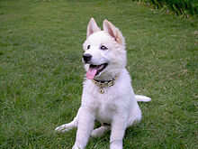 breeds-dog.blogspot.com