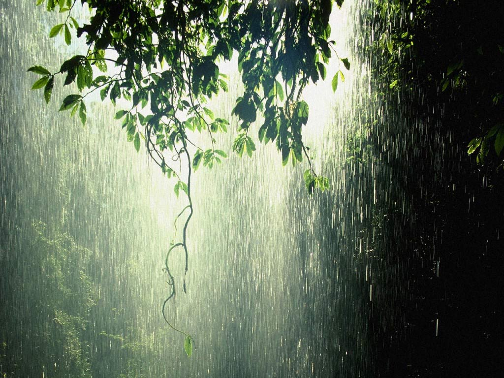 Raining Beautiful Images