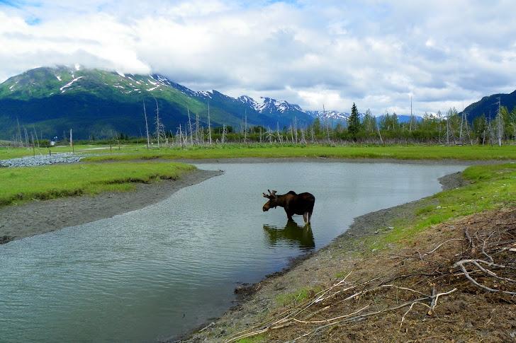 Alaska discount travel coupons