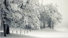 Sfondo invernale-08