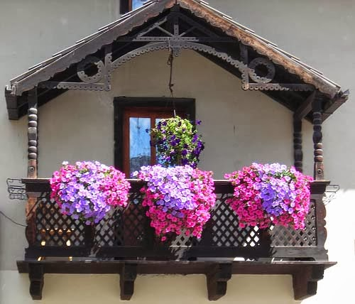Flowers in the Balcony