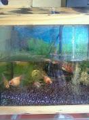Peceras con motor, filtros, liquidos de pecera, goldfish (4) en oferta. consultar pr
