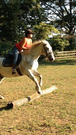 Training is going well, Kat and Mustang are quite the brave pair!