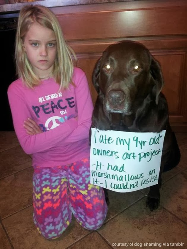 pet shaming pics