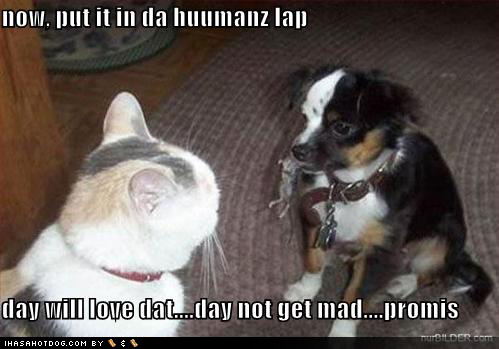 clip art and picture: Funny dog and cat pictures