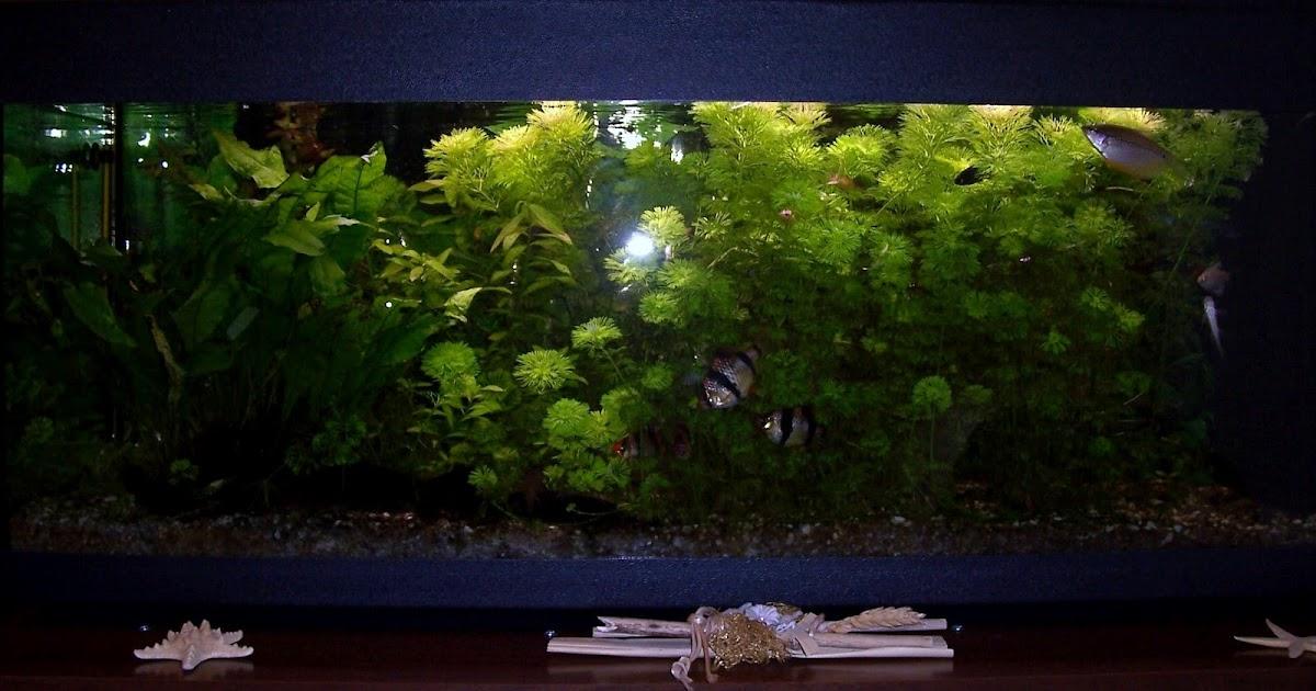 La vetrina arcobaleno il mio acquario d 39 acqua dolce for Acquario acqua dolce